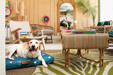 A Design-Forward Pet Bed — And An Adorable Pup — Could Be All Yours
